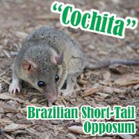 Cochita