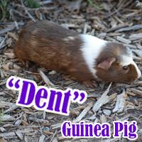 Dent_1