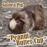 Peanut_Butter_Cup