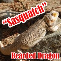 Sasquatch_1