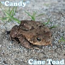 Our Amphibians
