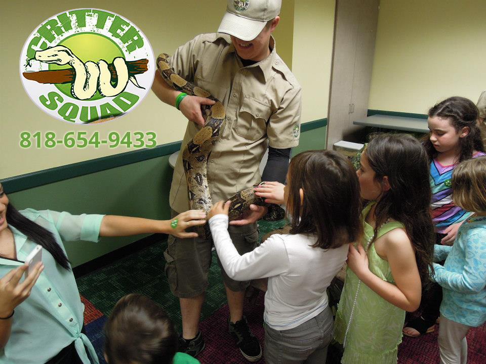 Book Reptile Shows for All Your Events