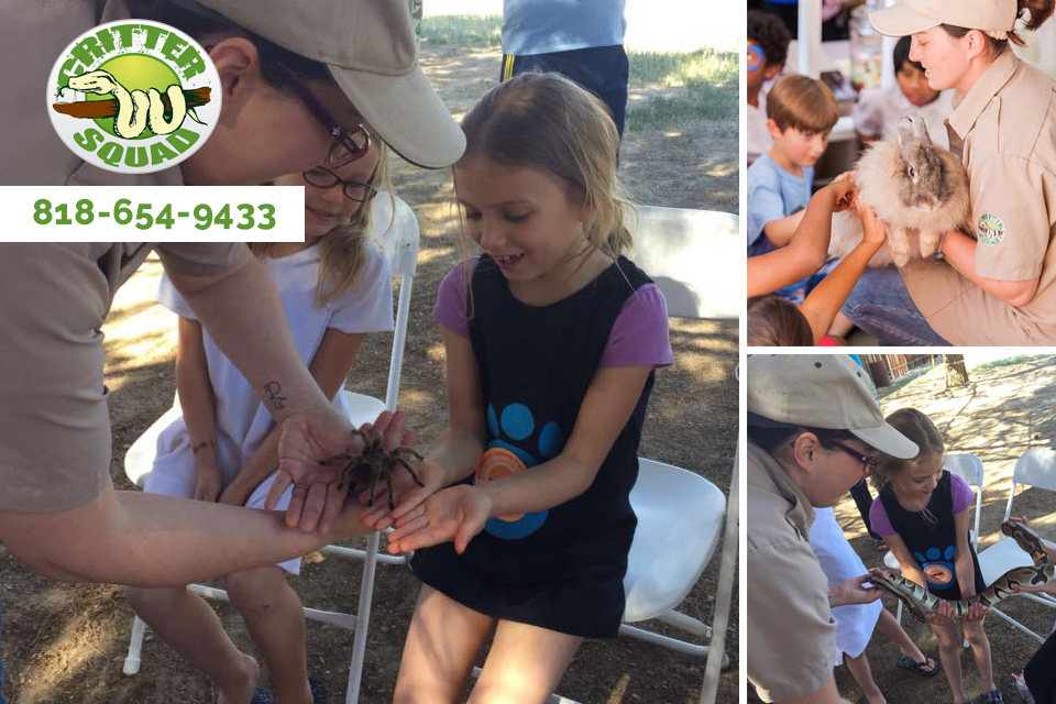 Fun and Excitement for All – A Petting Zoo for Birthday Parties