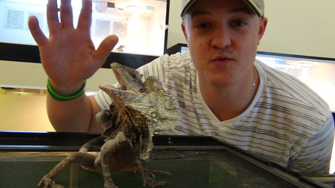 critter squad frilled dragon