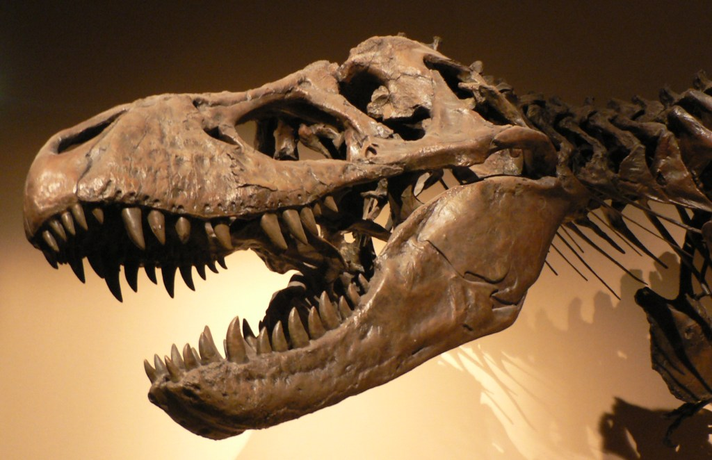 Palais de la Decouverte Tyrannosaurus rex p