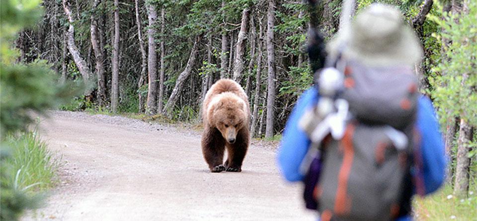 bearsafety