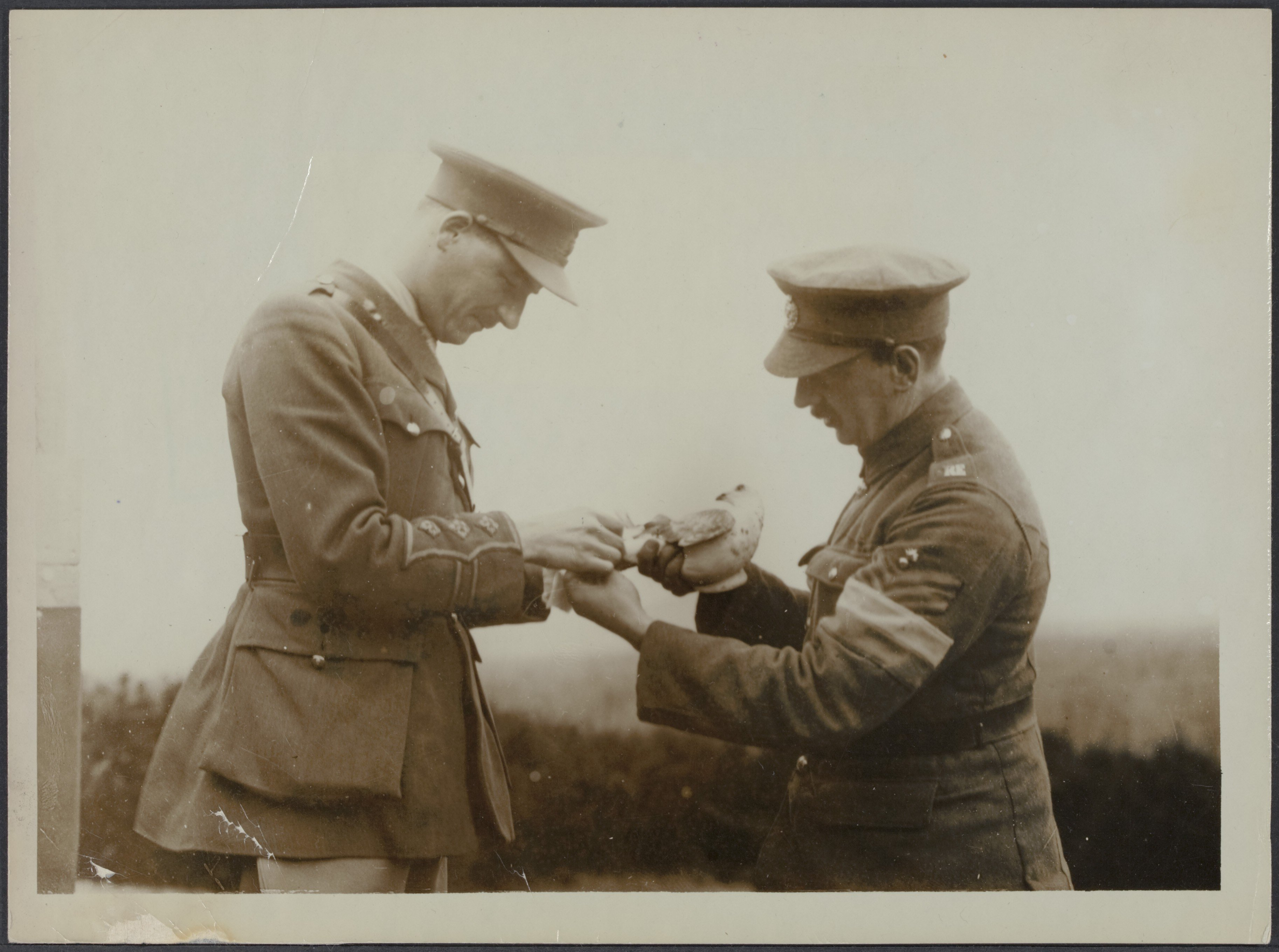 Bandaging the leg of a carrier pigeon which returned wounded with a message Nationaal Archief