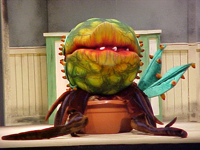 Little Shop of Horrors at Grafton High School
