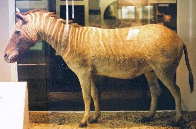 Quagga london