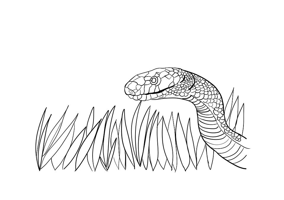 Slager Kleurplaat Snake Coloring Pages C S W D
