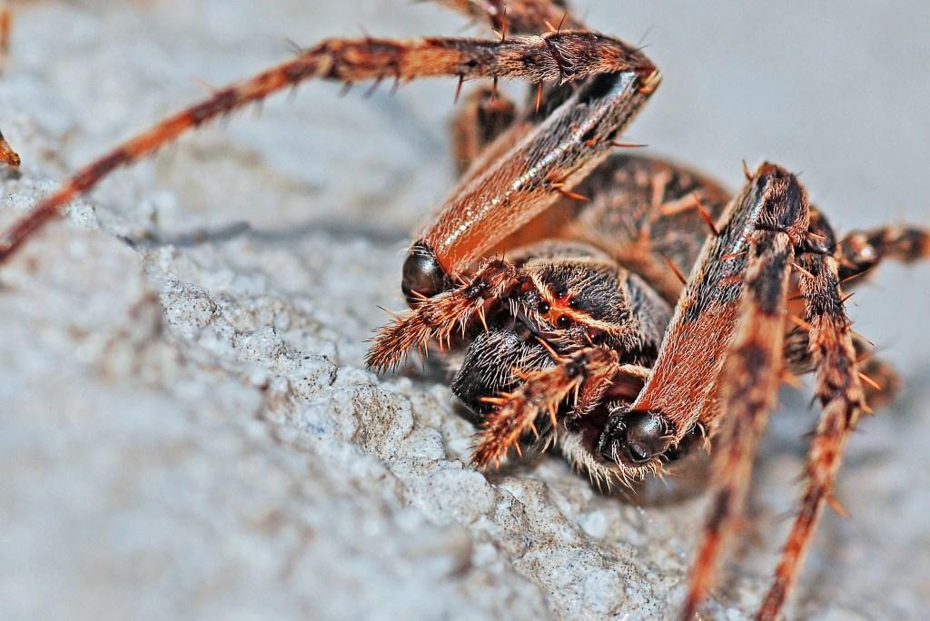spider arachnid macro insect