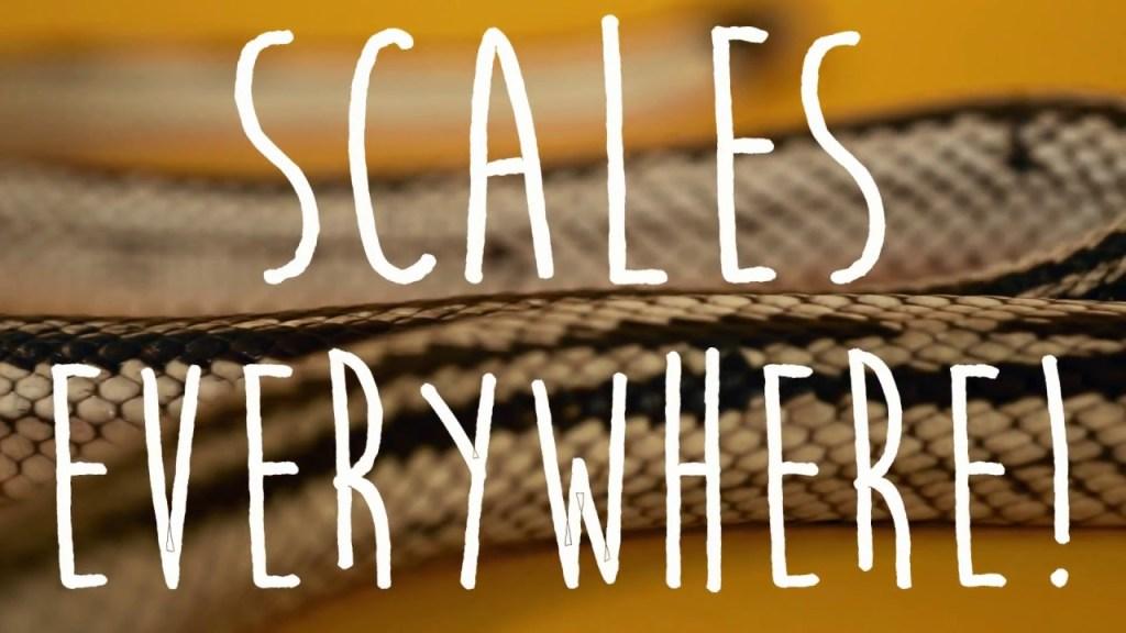 C S W D TV Episode  Snakes