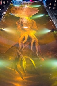 NZ Colossal Squid