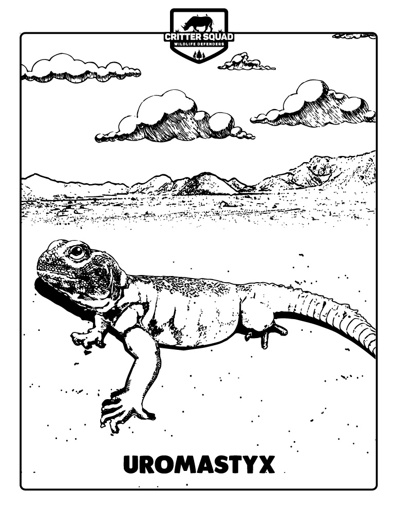 Lizard Coloring Pages Critter Squad Wildlife Defenders Petting