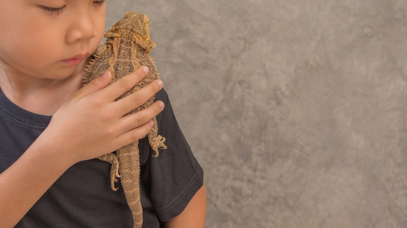 Let Us Help You with a Reptile Party Theme