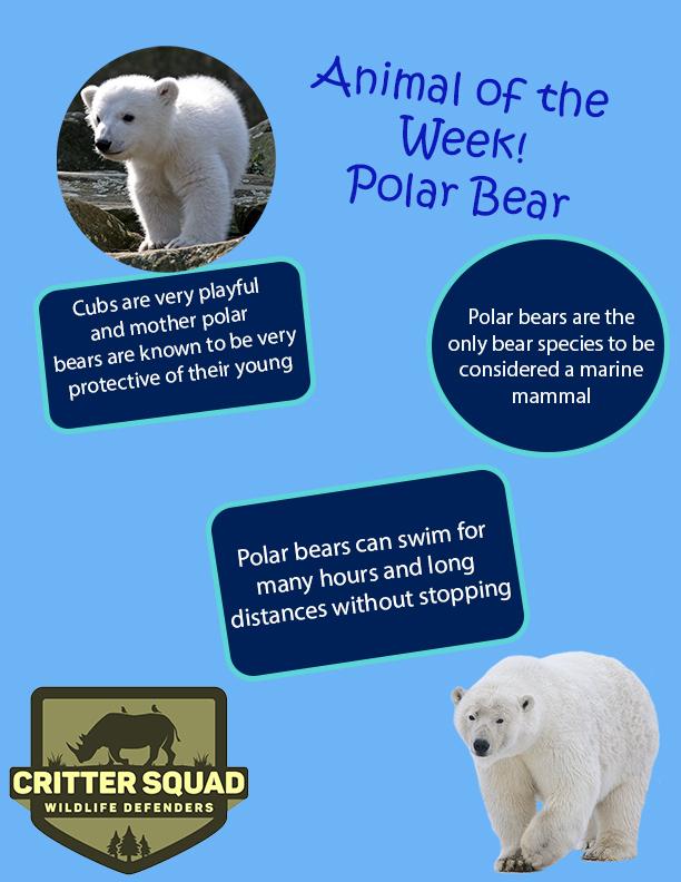 polar bear animal of the week