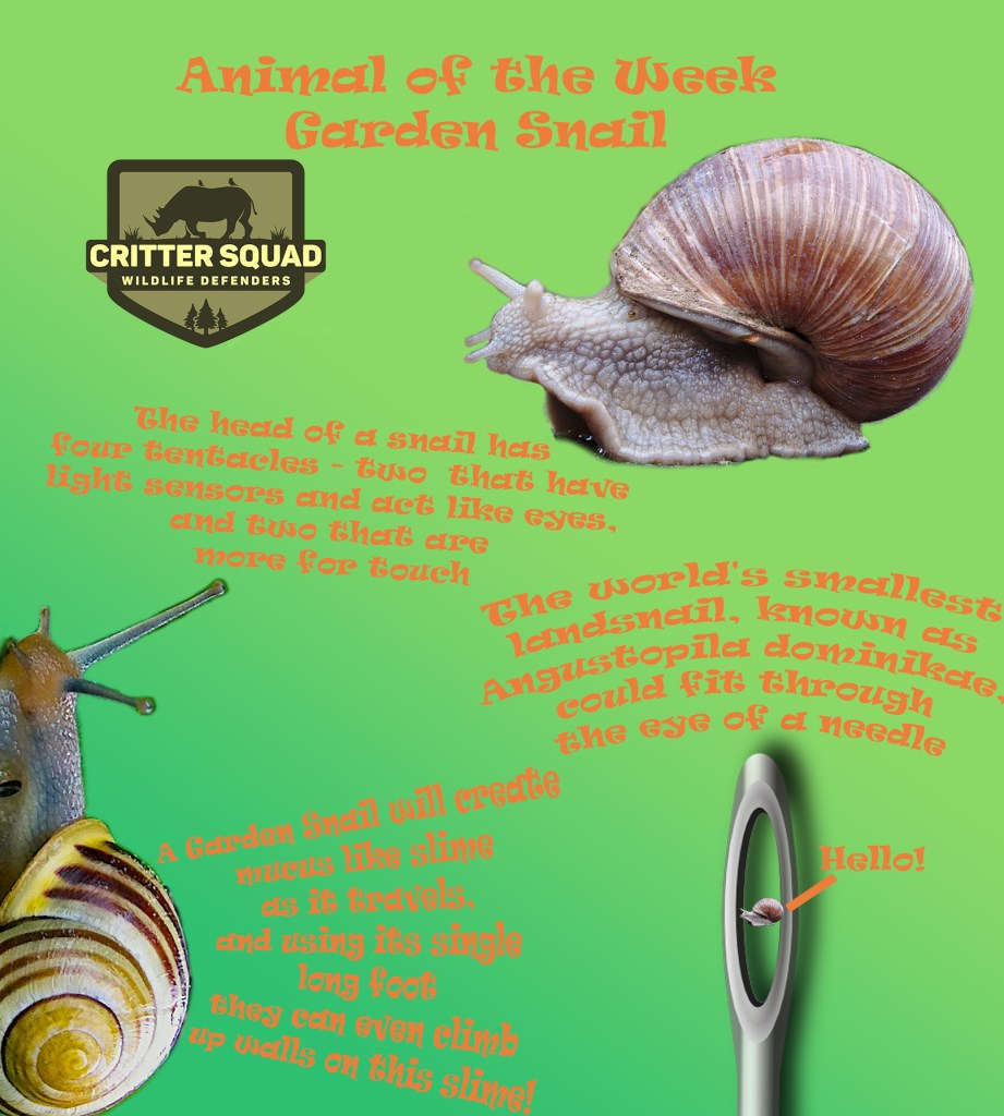 Animal of the week Garden Snail