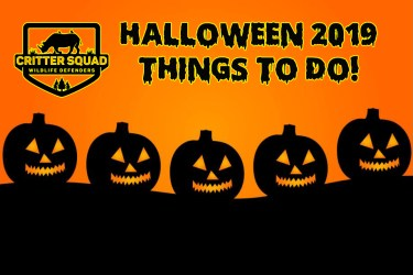 hallowen  things to do