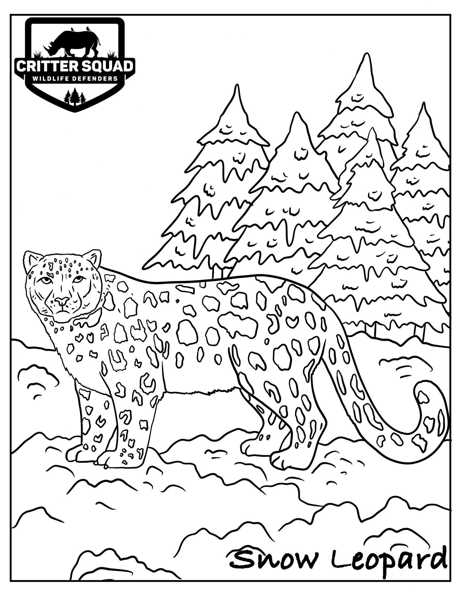 Leopard Coloring Pages : leopard, coloring, pages, Leopard, Coloring, C.S.W.D