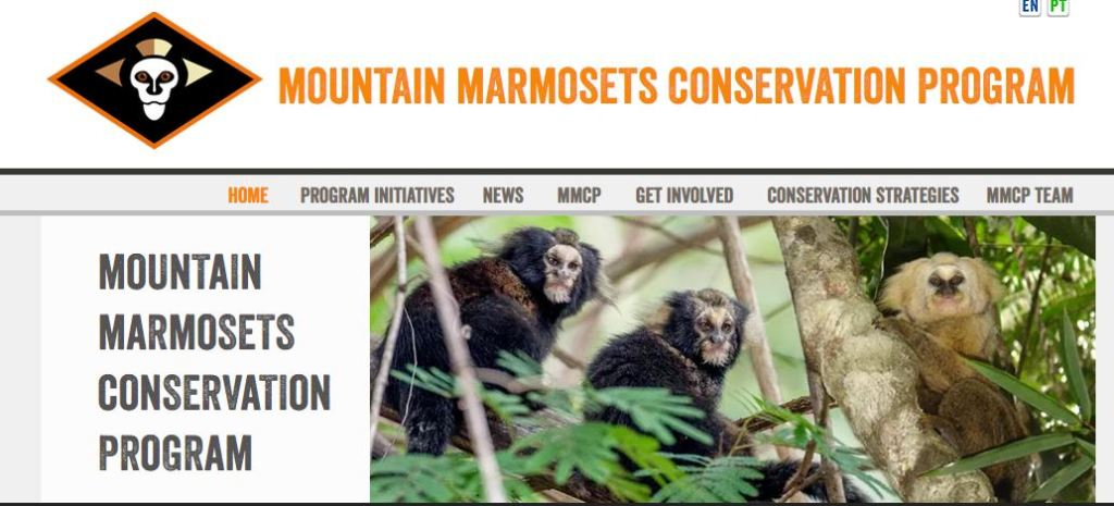 mountain marmoset conservation pic