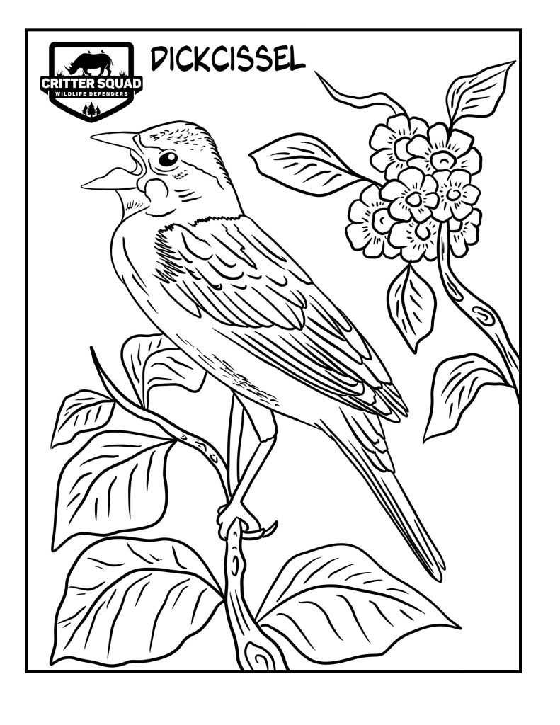 dickcissel coloring page
