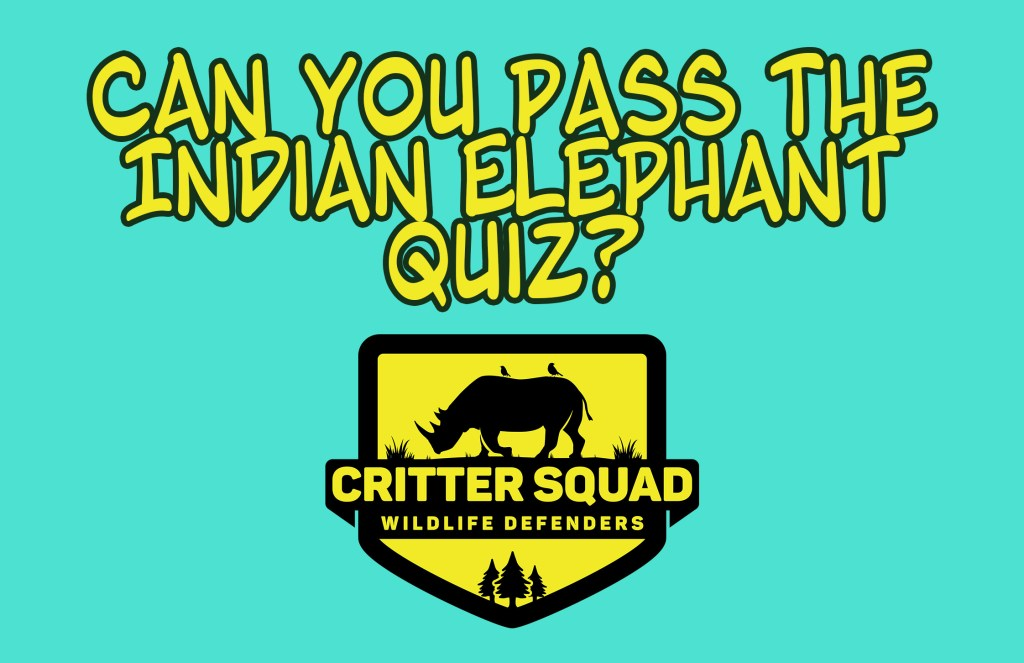 indian elephant quiz