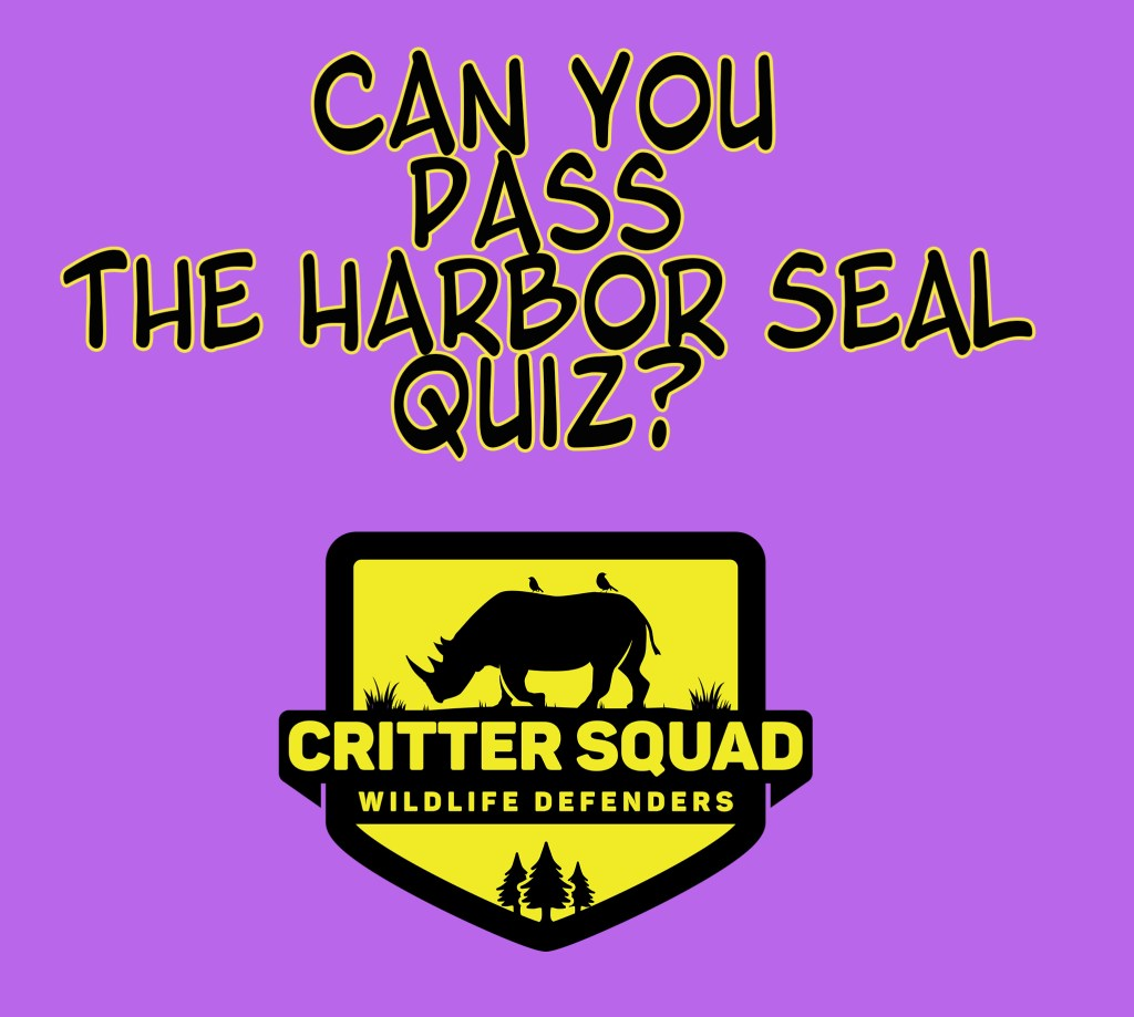 harbor seal quiz