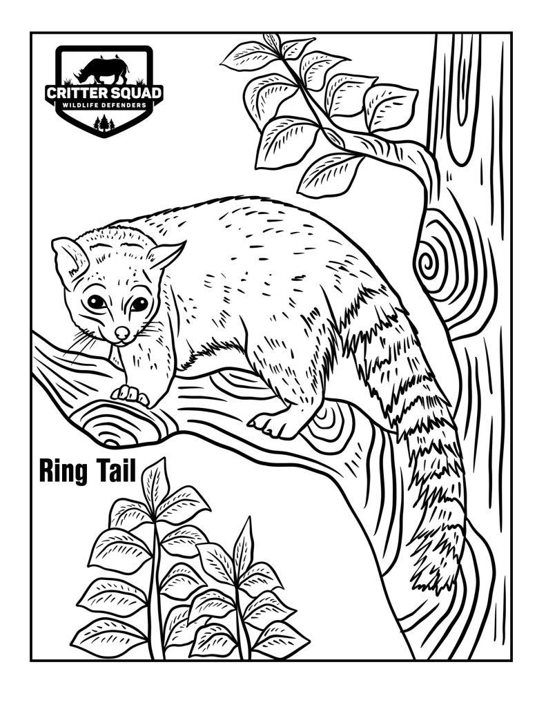 ring tail