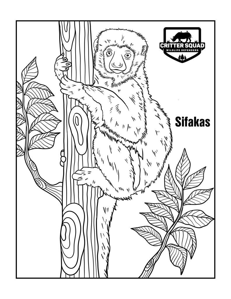 sifakas