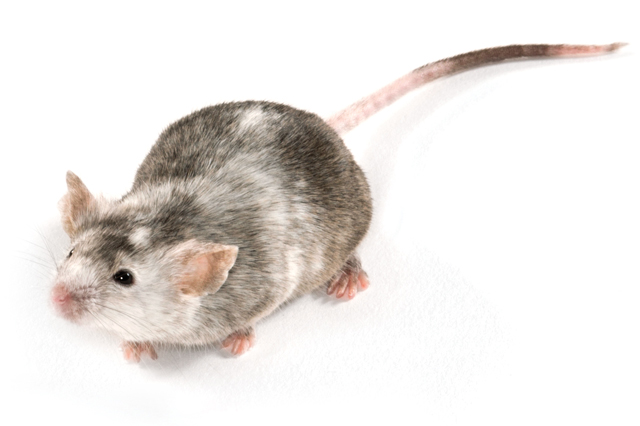 Study-Ready Knockout Mice Now Available Through Collaboration with genOway | Charles River Laboratories.