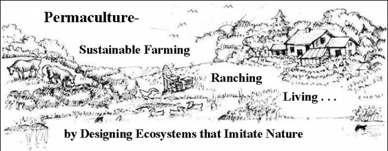 Bill Mollison Permaculture Design Manual Pdf