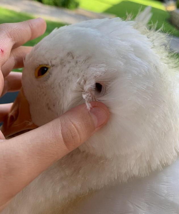 albino-nane-ushi-na-guska-12-raboti-od-sekojdnevieto-koi-mozhebi-ne-ste-gi-videle-12.jpg