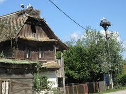 Nid de cigognes sur les maisons