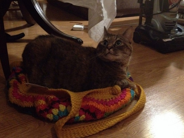 cat in a crochet fat bag