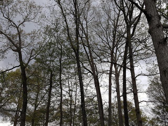 gray skies in Raleigh, North Carolina