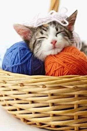 https://i0.wp.com/www.crochetconcupiscence.com/wp-content/uploads/2012/07/cat-yarn.jpg