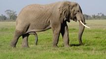 3 Days Kenya Safari Coast Tsavo East And