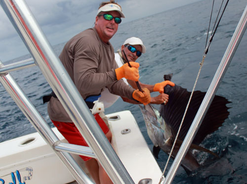 Sailfish Release Costa Rica