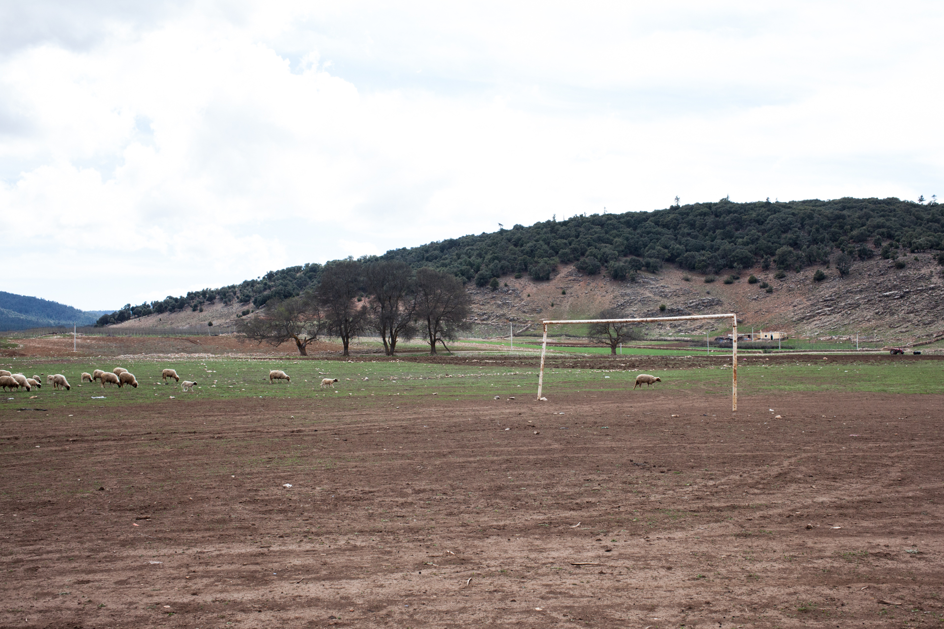 A football ground for sheeps