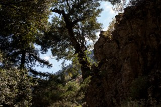 Entering the gorge, high rocks and big trees create a pleasant shadow that makes hiking pleasant even on really hot and sunny summer days