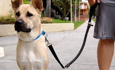 """In arrivo il """"patentino"""" per guidare i cani"""