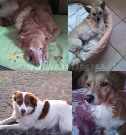 I 4 cani della signora Buono
