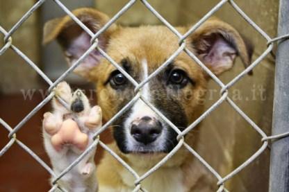 dog-shelter-1024x683