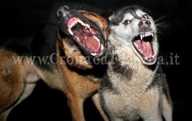 aggressione-cani