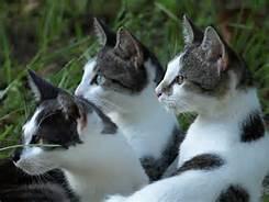 @ Graffi e morsi dei gatti sono pericolosi  @ FOTOUn caso Diletta Leotta in Russia  @ Diletta Leotta ringrazia per la solidarietà: la gente mi ama perché...  @ Svizzera: italiani frontalieri raus  @ Guidava a 170 all'ora, filmava con lo smartphone, si è schiantata