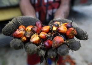 Olio di palma non fa male: rischi minimi solo per i lattanti