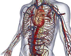 """Scoperto nuovo organo del corpo umano, si chiama """"interstizio"""": rivoluzionerà l'anatomia"""
