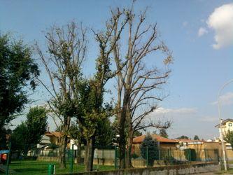 Ossona, alberi morti al parco giochi