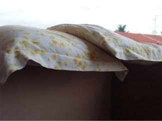 cuscini-324x243 Attenti al cuscino che parla troppo e causa divorzio Lifestyle Magazine Piazza Litta Prima Pagina