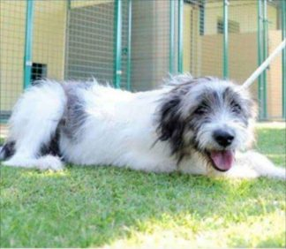 caneboffalora-324x282 Cane abbandonato a Boffalora. In attesa di adozione (Foto) Piazza Litta Prima Pagina